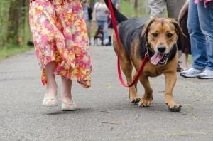 Dog Walk & K-9 Festival