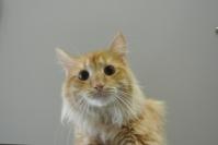 Garfield K30/88541