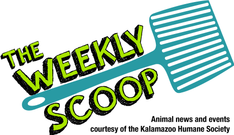 The Weekly Scoop